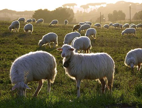 """Coldiretti, in Italia sempre meno allevamenti: """"In cinque anni scomparsi oltre due milioni gli animali"""""""