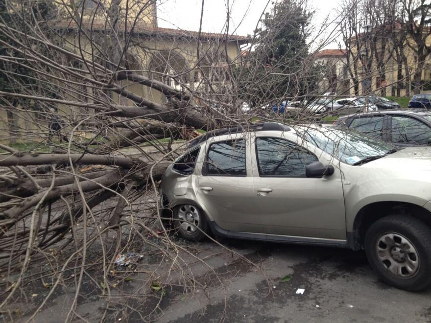 Il maltempo colpisce il Centro-Sud, a Torino il vento raggiunge i 150 km/h. Donna uccisa dalla caduta di un albero a Urbino