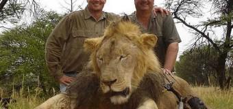 Ha ucciso e decapitato Cecil, leone simbolo dello Zimbabwe. Ricercato Walter Palmer dentista americano con la passione della caccia grossa. Rischia fino a 15 anni di carcere